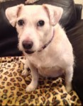 Betty (Rovers Dog Rescue, Essex)
