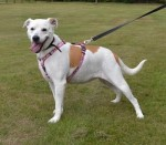 Millie (Jerry Green Dog Rescue, North Yorkshire)
