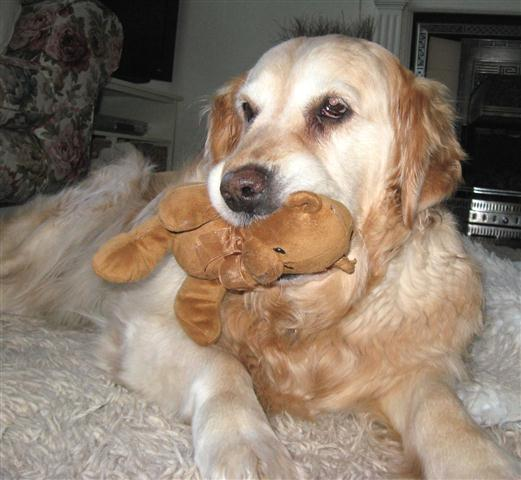 Suki, Teddy, Oldies Club, sponsor dog, rescue, facebook, competition, Animal Friends