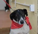 Tamsin (Ashbourne Animal Welfare, Derbyshire)