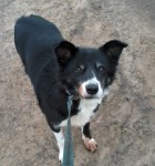 Bud (Dumfries and Galloway Canine Rescue Centre, Dumfries)