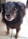 Max Southport – Little hairy dreamboat! (Oldies Club, fostered Merseyside)