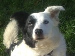 Molly (RSPCA Macclesfield, fostered Cheshire)