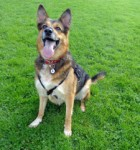 Tara (Dumfries and Galloway Canine Rescue Centre, Dumfries)