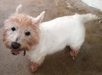 Dougal (Ark Animal Rescue, Lincolnshire coast)