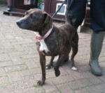 Marge (Manchester Dogs' Home)