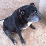 Marley (Ark Animal Rescue, Lincolnshire coast)