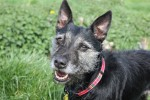 Tia (Freshfields Animal Rescue Centre, Liverpool)