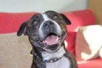 Xam (Freshfields Animal Rescue Centre, Liverpool)