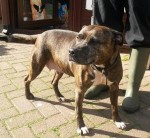 Zara (Manchester Dogs' Home)