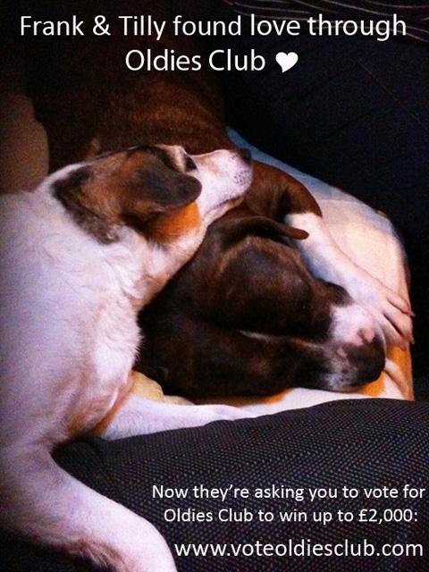 Oldies Club, dog rescue, vote, Staffie
