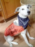 SPECIAL APPEAL: Could you offer pretty Perdy a home?