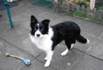Beautiful Belle of the Ball (Oldies Club, fostered London)