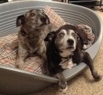 Charlie & Lucy – The Snugglebugs! (Oldies Club, fostered Derbyshire)