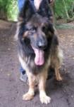 Rudy (Animal Helpline, Cambridgeshire)