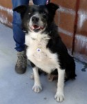 Taz (Dumfries and Galloway Canine Rescue Centre, Scotland)