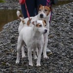 Jack and Jill (Animal Rescue Cymru, West Wales)