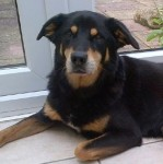 Spike – TLC a speciality (Oldies Club, fostered Surrey)