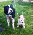 Amber and Hercules (Happy Endings Rescue, Kent)