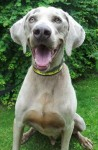 Basil (Dogs Trust West Calder, Scotland)