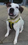 Fagan (Dogs Trust, Glasgow)
