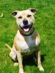 Jenna (West Norfolk RSPCA, Kings Lynn)