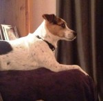 Lucy (Helping Pets North East, Newcastle)