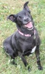 Phoebe (Freshfields Animal Rescue, Liverpool)