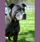 Sov (Wallace Kennels, Essex)