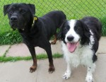 TJ and Dax (Dogs Trust West Calder, Scotland)