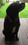 Zenna (Animal Action Trust Essex)