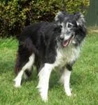 Susie (Chilterns Dog Rescue Society, Herts)