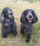 Bella and Millie (National Animal Welfare Trust, Berkshire)