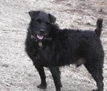 Sir Brian of Patterdale (Oldies Club, fostered Devon)