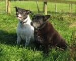 Lucy and Sweep (Wolfwood Rescue,Lancaster)