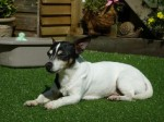 Milo the Magnificent (Oldies Club, fostered Wiltshire)