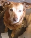 Sweet Snuggly Sandy (Oldies Club, fostered Greater Manchester)