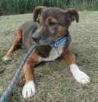 Buster (Safe Rescue, fostered Great Yarmouth)
