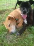 Honey and Suki (Jerry Green Dog Rescue, South Lincolnshire)