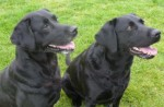 Sally and Stella (West Norfolk RSPCA, King's Lynn)