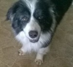Wellington Boote (West Yorkshire Dog Rescue)