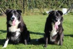 Buster and Bobby (RSPCA West Hatch, Somerset)