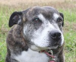 Star (Freshfields Animal Rescue, Liverpool)