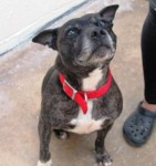 Tess (Ark Animal Rescue, Lincolnshire coast)