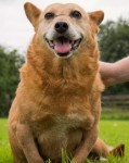 Amber (Love Underdogs, Warwickshire)