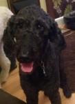 Nellie (Rovers Dog Rescue, Essex)