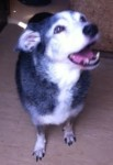 Penny (Pro Dogs Direct, Kent)