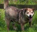 Rhona (Love Underdogs, Warwickshire)