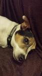 Jasper (Helping Pets North East, Newcastle upon Tyne)