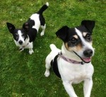 Minnie and Mickey (Epsom Canine Rescue, Reigate, Surrey)